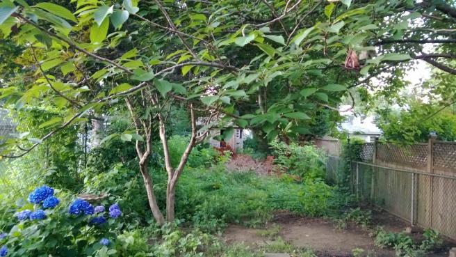overgrown yard